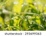 Dew Drops In Grass Lit By Earl...
