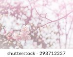 Soft Tabebuia In Pink Tone Wit...