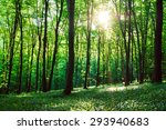 beautiful green forest with... | Shutterstock . vector #293940683