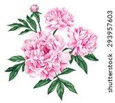 garden peony. watercolor  hand... | Shutterstock .eps vector #293957603