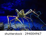 giant japanese spider crab in ... | Shutterstock . vector #294004967