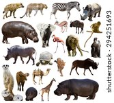 set of hippopotamus  and other... | Shutterstock . vector #294251693