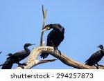 cormorants on a branch | Shutterstock . vector #294257873