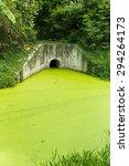 Dirty Green Toxic Water...