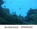 fish in eilat | Shutterstock . vector #29430163