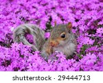 baby squirrel in flowers   Shutterstock . vector #29444713