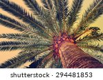 palm tree in soft light of...   Shutterstock . vector #294481853