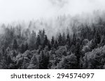 Misty Forests Of Evergreen...