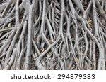 tree root | Shutterstock . vector #294879383