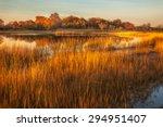 Tall Golden Grass Surrounding ...