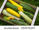 Fresh Healthy Green Zucchini...