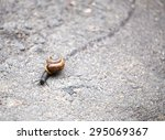 Snail Crawling On The Road...