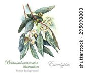 watercolor vector eucalyptus.... | Shutterstock .eps vector #295098803
