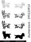 dogs  australian terrier  ...   Shutterstock .eps vector #295123913