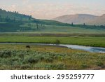 Lamar Valley and a bison at Yellowstone National Park/ Lamar Valley