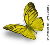 beautiful yellow butterfly... | Shutterstock . vector #295330853