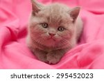 adorable kitten on pink blanket | Shutterstock . vector #295452023