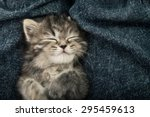 close up of cute tabby  kitten... | Shutterstock . vector #295459613