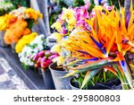 strelitzia reginae flowers... | Shutterstock . vector #295800803