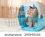 Tabby Cat Inside A Cat Carrier...