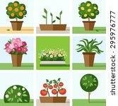 Garden  Vegetable Garden ...