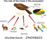 The Role Of The Hawk In The...