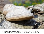 Expressive Hoof Fungus With Th...