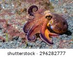coconut octopus on sand... | Shutterstock . vector #296282777
