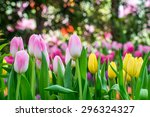 tulip gardens and blurred... | Shutterstock . vector #296324327