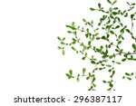 tree branches on white... | Shutterstock . vector #296387117