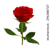 red rose isolated on white... | Shutterstock . vector #296388737