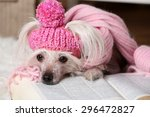 hairless chinese crested dog... | Shutterstock . vector #296472827