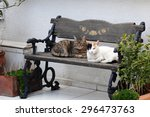 Cats On Then Bench