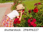 Stock photo girl in a hat inhales fragrance of large red roses in the garden 296496227