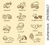 doodle illustration of nuts set | Shutterstock .eps vector #296508617