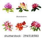 Rhododendron Poster. ...