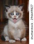 Stock photo funny dirty kitty 296649827