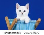 Stock photo cute kitten in a box on a blue background 296787077