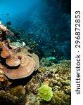 diver blue water scuba diving... | Shutterstock . vector #296872853
