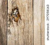Siberian Tiger Eye In Wooden...