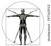 vitruvian human or man as a...   Shutterstock . vector #297163913