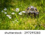 Tortoise In The Garden With...