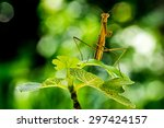 praying mantis on green plant... | Shutterstock . vector #297424157