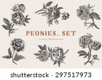 vintage vector illustration.... | Shutterstock .eps vector #297517973