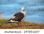 Seagull With A Red Beak And...
