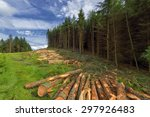 Logs Of Trees In The Forest...