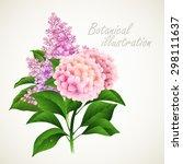 botanical vector illustration....   Shutterstock .eps vector #298111637