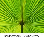 texture of green palm leaf | Shutterstock . vector #298288997