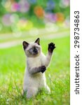 Stock photo cute kitten playing and begging on the grass staying 298734863