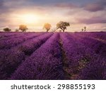Lavender Field At Sunset ...